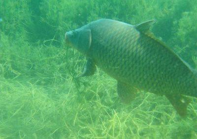 Black Bass en lagunas de Ruidera
